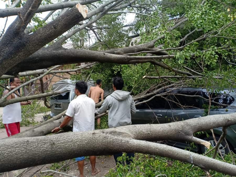 Angin Kencang Tumbangkan Pohon, 2 Mobil dan 1 Motor Jadi Korban